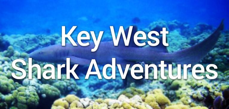 Key West Shark Adventures  Best On Key West