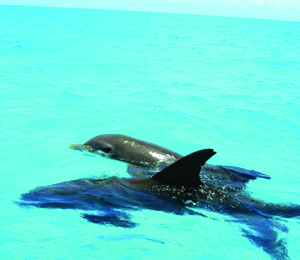 Key West Dolphin Encounters