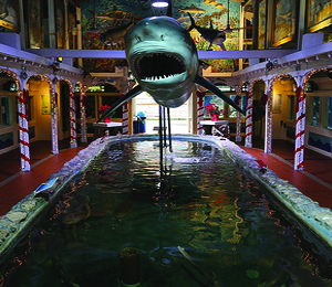 Fun Ways For Kids And Adults To Enjoy Key West