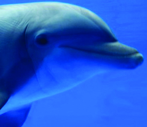 Key West - Dolphin Encounters With A Purpose
