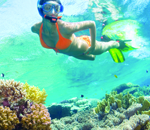 The Anatomy of the Florida Reef: Why You Should Go Snorkeling in Key West