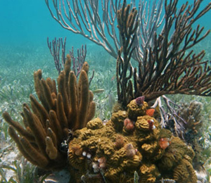 Key West's Living Coral Reefs